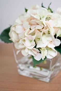 25 - Hydrangea - Glass Cube Vase - Loose - SHOP ONLINE - Botanical Statements