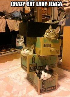 Crazy cat lady Jenga...ha!