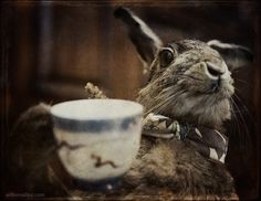Tea With the March Hare