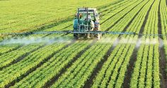 As the active ingredient in Roundup, glyphosate spells billions of dollars in sales for Monsanto as farmers around the world use it in their fields and