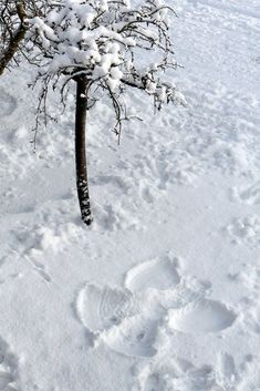 Snow angels make my heart feel lighter.