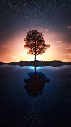 tree wallpaper by dathys - dc - Free on ZEDGE™ Iphone Wallpaper Sky, Wallpaper Space, Beautiful Nature Wallpaper, Tree Wallpaper, Scenery Wallpaper, Colorful Wallpaper, Cool Wallpaper, Beautiful Landscapes, Wallpaper Backgrounds