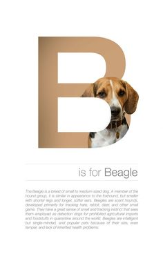 Dog Alphabet is a creative project by Romania-based graphic designer Andrei Clompos, in which he matches letters of alphabet with different dog breeds. Web Design, Graphic Design Tutorials, Book Design, Layout Inspiration, Graphic Design Inspiration, What Is Graphic Design, Plakat Design, Magazine Layout Design, Photoshop