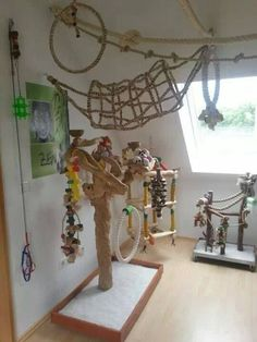 Bird room ideas for parrots keep your pet bird happy and healthy.