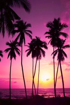 The Pom trees pink sky