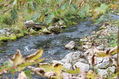 4 Freizeiten Bachlauf zwischen Königssee und Obersee