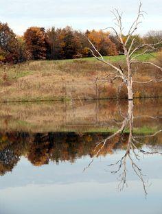 Reflect by angelandspot.deviantart.com on @deviantART