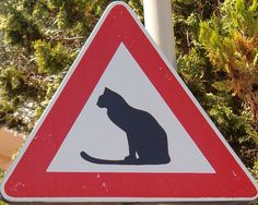 Take care of the cats!    Sign seen in Cervo; Italy
