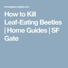 How to Kill Leaf-Eating Beetles | Home Guides | SF Gate