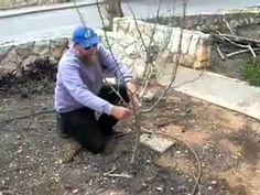 ▶ Pruning Fruit Trees - Pruning For The First 4 Years, Part 1 of 2 - YouTube