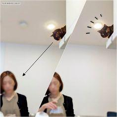 コーヒーを淹れる私。 . を見るてっちゃん。 . を撮る夫。よくある光景 #japanesecats #cat #さびねこ #サビ猫 #さび猫 #ねこ写真 #ねこのいる暮らし