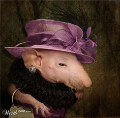 pig w/ hat