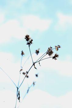 Tumblr photo By Sabrina Bodigoi