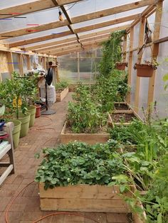 We just put in some cold season crops, we're excited to see how fall/winter treats our greenhouse! Indoor Vegetable Gardening, Vegetable Garden Planning, Vegetable Garden For Beginners, Vegetable Garden Design, Indoor Garden, Organic Gardening, Vegetable Bed, Building Raised Garden Beds, Garden Design Plans