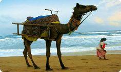 Desert and Beaches in India