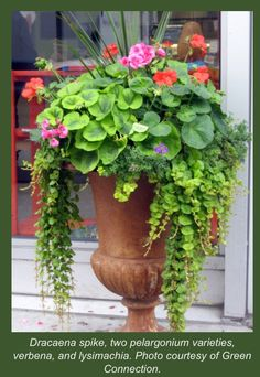 Pot flowers for the front porch