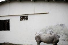 Touko Hujanen photography