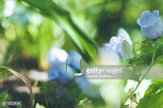 Foto stock : A walk in a botanical garden