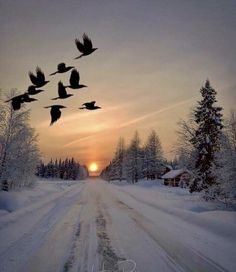 Image may contain: sky, outdoor and nature Winter Sunset, Winter Scenery, Winter Love, Winter Snow, All Nature, Amazing Nature, Winter Photography, Nature Photography, Winter Wonderland