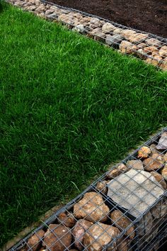 Gabion walls also appear in the garden, used to retain an elevated patch of lawn.