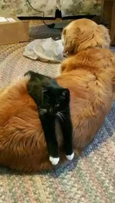 10 Cute Animal Pictures for Today - Yeryüzünün süsleri - Hunde I Love Cats, Cute Cats, Funny Cats, Animals And Pets, Funny Animals, Cute Animals, Chat Maine Coon, Raining Cats And Dogs, Cute Animal Pictures