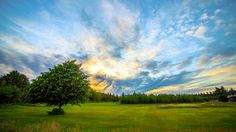 sky tree meadow wallpaper download full free high size definition