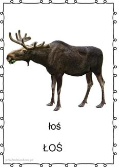las6 Montessori, Moose Art, Education, Nature, Geography, Speech Language Therapy, Naturaleza, Onderwijs, Nature Illustration
