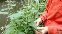 Vodní ekosystémy - tekoucí voda Plants, Planters, Plant, Planting