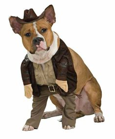 Indiana Jones Pet Costume, X-Large - http://www.thepuppy.org/indiana-jones-pet-costume-x-large/