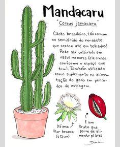 Inside Garden, Herbal Essences, Cactus Y Suculentas, Posca, Garden Trees, Green Life, Outdoor Plants, Cactus Plants, Exotic Plants