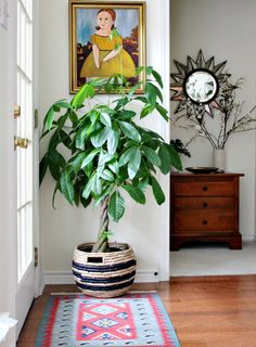 Roundup: 10 Stylish Indoor plants. Faves: rubber plant, snake plant, and string of pearls