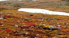 Durante el verano, las temperaturas suben un poco, y la capa superior del permafrost se derrite, dejando el terreno muy pasada. La tundra está cubierta de pantanos, lagos, pantanos y arroyos durante los meses cálidos. Generalmente las temperaturas durante el día durante el aumento de verano a aproximadamente 12 ° C (54 ° F), pero a menudo pueden caer a 3 ° C (37 ° F) o incluso por debajo de cero.