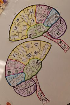 Build-a-Brain 'Thinking Cap' Brain HAT - Foldable Creation