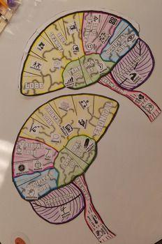 Free printable: Hemisphere Brain Hat from ElsevierDirect ...
