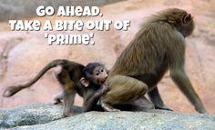 LOL / Go ahead. Take a BITE outta 'PRIME!