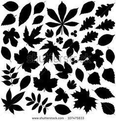 Download free vector set of leaves - leaf shapes: oak leaf shapes, tree leaf shapes, plant leaf shapes, four leaf clover shapes, leaf shape, shapes…