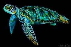 Animals in detail - seaturtle turtle painting, sea turtle art, sea