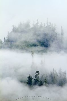 Photo of a forest in the Great bear Rainforest, saturated with fog, British Columbia, Canada.