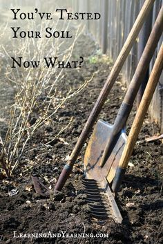 You've tested your soil; now what? Amending your soil naturally.