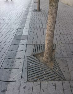 """A tree which is on """"real ground"""". The tree pit grid is quite limited."""