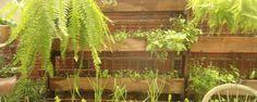 Como reconhecer se sua horta está com falta de sol: 3 sinais básicos - Tratando-se de ervas e temperos, a exposição direta à no mínimo 4-5 horas de sol diário é essencial. Dependendo da posição de nossa horta, com o passar das estações ela estará sujeita a uma variação muito grande de sol no decorrer dos dias e estações, qual poderá privá-la do sol em algum período ... - http://www.ecoadubo.blog.br/ecoblog/2014/11/20/como-reconhecer-se-sua-horta-esta-com-f