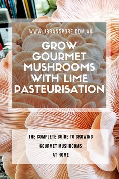 What Is Lime Pasteurisation - The Complete Guide To Growing Mushrooms Mushroom Spores, Mushroom Cultivation, Edible Mushrooms, Stuffed Mushrooms, What Is Lime, Oyster Mushroom Spawn, Growing Mushrooms At Home, Diy Garden Projects, Garden Ideas