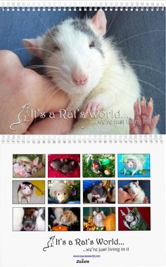 Rat calendar 2016