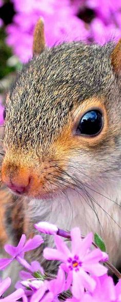 Squirrel With Beautiful Setting. Secret Squirrel, Cute Squirrel, Baby Squirrel, Squirrels, Hamsters, Rodents, Animals And Pets, Funny Animals, Cute Animals