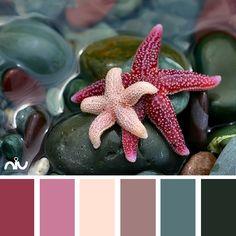 Star fish (fauna)