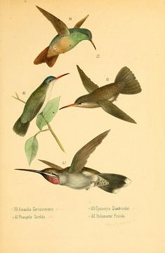 lots of vintage pictures n84_w1150 by BioDivLibrary, via Flickr