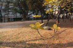 http://ift.tt/2jr6Zkd #Nature_breathtaking #Photos 공원에서 by jeongyjj56561