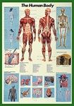 Freaky - The Human Body Dorm Wall Poster