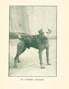 RARE Dog Book 1927 The Airedale Terrier by Holland Buckley