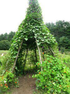I love this bean tee pee! Posted by City Farmer. MonaRaeBeads.etsy.com